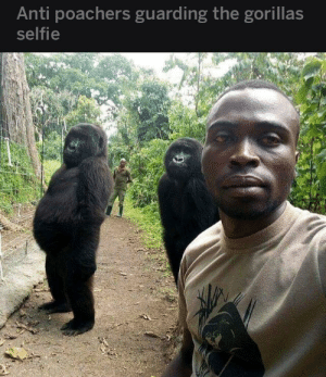 Friend sent me this.: Anti poachers guarding the gorillas  selfie Friend sent me this.