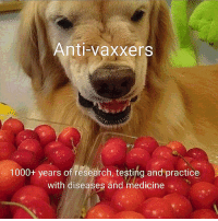 Doctor, Juice, and Medicine: Anti-vaxxers  1000+ years of research, testing and practice  with diseases and medicine Haha essential oils are better than mystery doctor juice