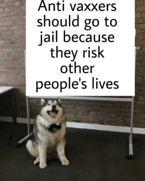 Old topic but doggo says the truth: Anti vaxxers  should go to  jail because  they risk  other  people's lives Old topic but doggo says the truth