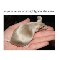 Girl Memes, Anyone Know, and Anyone: anyone know what highlighter she uses i hate rodents but it's glowing