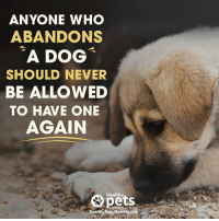 No one deserves to be abandoned… 😢: ANYONE WHO  ABANDONS  A DOG  SHOULD NEVER  BE ALLOWED  TO HAVE ONE  AGAIN  8 pets  A  Healthy Pets Mercola com No one deserves to be abandoned… 😢