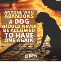 "You're not abandoning a ""thing."" You're abandoning a LIVING being.: ANYONE WHO  ABANDONS  A DOG  SHOULD NEVER  BE ALLOWED  TO HAVE  ONE AGAIN  Healthy  With Dr. Karen Becker  HealthyPets.Mercola.com You're not abandoning a ""thing."" You're abandoning a LIVING being."