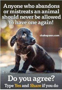 Animals, Memes, and Animal: Anyone who abandons  or mistreats an animal  should never be allowed  to have one again!  shakepaws.com  Do you agree?  Type Yes and Share if you do Animals should never be mistreated.
