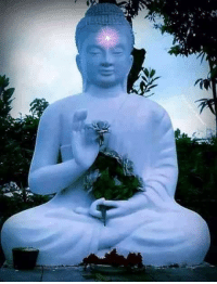 Anyone who is not working toward the truth is missing the whole point of living.  ~ The Buddha ~: Anyone who is not working toward the truth is missing the whole point of living.  ~ The Buddha ~