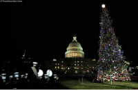 The @usnavy Band plays holiday music during the U.S. Capitol Christmas Tree lighting ceremony on Dec. 6. The 80-foot Noble Fir was harvested from the Willamette National Forest in Oregon.: AP Photo/Manuel Balce Ceneta The @usnavy Band plays holiday music during the U.S. Capitol Christmas Tree lighting ceremony on Dec. 6. The 80-foot Noble Fir was harvested from the Willamette National Forest in Oregon.