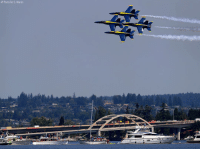 Memes, Ted, and Seattle: AP Photo/Ted S. Warren Members of the @usnavyblueangels performed in the Seafair Air Show during Seafair Weekend Festival in Seattle.