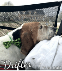 """Dogs, Memes, and 🤖: APLACETOBARK Just got back from the creek & a ride in the gator. """"Drifter"""" told me he wanted to stay one more day...   It's so hard when dogs are terminal & they want to live, but the cancer just takes over.  He tries to bay & do his mighty hound barks, but just can't. The tumors are too too big & no surgeries can be done to help him. It's so heartbreaking. Life isn't fair... but it is all we have. To be Loved at the end of our days, is how we all should leave this world.  He inspired me to do a project in his honor, that will leave a legacy of kindness for other homeless pets. I will launch it later this week.   Keep this sweet old dog, in your thoughts & prayers.   He may have never found a Forever home, but he was Loved here & will Forever be in our hearts❤️  #everylifematters #aplacetobark #seniordogsmatter"""