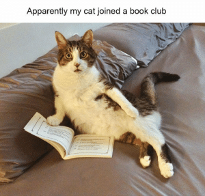 Apparently, Cats, and Club: Apparently my cat joined a book club I always wondered what they do when we're not home. #pets #cats #book #bookclub #reading #wednesday #humpday
