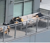 Apparently StanleyCup parades are a tough task - Olli Maatta is seen here recovering from yesterday's festivities NHLDiscussion: Apparently StanleyCup parades are a tough task - Olli Maatta is seen here recovering from yesterday's festivities NHLDiscussion