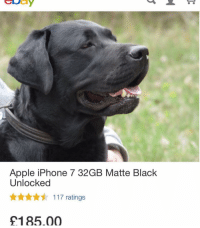 Apple, Iphone, and Memes: Apple iPhone 7 32GB Matte Black  Unlocked  ww 117 ratings  £185.00 dog appear