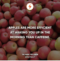 👍 — Source: http:-www.livestrong.com-article-547850-does-eating-an-apple-in-the-morning-wake-you-up-better-than-drinking-a-cup-of-cofee-: APPLES ARE MORE EFFICIENT  AT WAKING YOU UP IN THE  MORNING THAN CAFFEINE.  THE MORE YOU KNOW  @FACT BOLT 👍 — Source: http:-www.livestrong.com-article-547850-does-eating-an-apple-in-the-morning-wake-you-up-better-than-drinking-a-cup-of-cofee-
