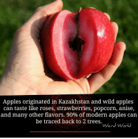 Apple, Memes, and Appl: Apples originated in Kazakhstan and wild apples  can taste like roses, strawberries, popcorn, anise,  and many other flavors. 90% of modern apples can  be traced back to 2 trees.  Weird World