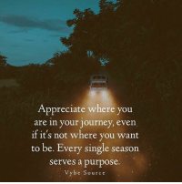 Journey, Memes, and Appreciate: Appreciate where you  are in your journey, even  if it's not where you want  to be. Every single season  serves a purpose.  Vybe Source This! via @vybesource