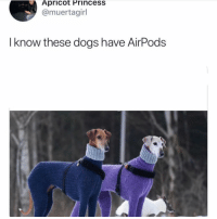 Dogs, Memes, and Princess: Apricot Princess  @muertagirl  I know these dogs have AirPods Can I speak to your manager? Tw muertagirl