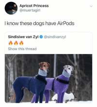 Dogs, Princess, and Dank Memes: Apricot Princess  @muertagirl  I know these dogs have AirPods  Sindisiwe van Zyl@sindivanzyl  Show this thread @muertagirl