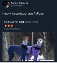 This has become an AirPod meme page: Apricot Princess  @muertagirl  I know these dogs have AirPods  Sindisiwe van Zyl  @sindivanzyl  Show this thread This has become an AirPod meme page