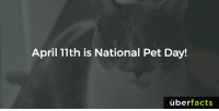 Happy National Pet Day!: April 11th is National Pet Day!  uber  facts Happy National Pet Day!