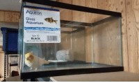 i think my fish has autism: AQUEOn  Glass  Aquariunm  Size 10  BLACK i think my fish has autism