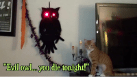 """Memes, 🤖, and Funy: AR FUNI  WEvilowl.ro you die tonight!"""""""