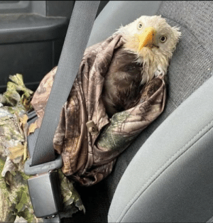 AR Game and Fish rescued this presumed dead eagle and it captures our country's current state perfectly: AR Game and Fish rescued this presumed dead eagle and it captures our country's current state perfectly