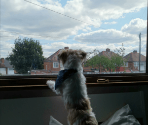 Boy, My Little, and Check: ar My little boy loves to be nosey and check on the neighbours