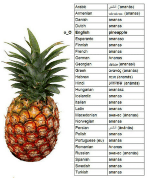 """theblackcatstirs:  shiningartifact:  ziusik:  thinly:   -Sir, we've found this and we needed you to name it. -Pineapple. -But we figured we might as well just call it """"Ananas"""" since the majority of the world refers to it as- -Pineapple. -But sir- -Pine. Apple.  CRYING I HAVE TO REBLOG IM SORRY OMFG  PINE. APPLE.  LOL THIS IS THE GREATEST.  If this doesn't perfectly sum up the English language I don't know what does : Arabic  Armenian  Danish  Dutch  ananas)  ua wh wu (ananas)  ananas  ananas  pineapple  ananaso  ananas  ananas  Ananas  o O English  Esperanto  Finnish  German  Georgian  Greek  Hebrew  bdun (ananasi)  avavás (ananas)  onx (ananás)  3EIAITH (ananas)  Hungarian  Icelandic  Italian  Latin  Macedonian aHaHac (ánanas)  Norwegianananas  ananász  ananas  ananas  ananas  Persian  Polish  i (ananas)  ananas  Portuguese (eu) ananas  Romanian  Russian  Spanish  Ananas  ананас (ananas)  ananás  ananas  ananas  Turkish theblackcatstirs:  shiningartifact:  ziusik:  thinly:   -Sir, we've found this and we needed you to name it. -Pineapple. -But we figured we might as well just call it """"Ananas"""" since the majority of the world refers to it as- -Pineapple. -But sir- -Pine. Apple.  CRYING I HAVE TO REBLOG IM SORRY OMFG  PINE. APPLE.  LOL THIS IS THE GREATEST.  If this doesn't perfectly sum up the English language I don't know what does"""