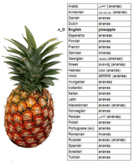 "Apple, Spanish, and Pineapple: Arabic  Armeniar  Danish  Dutch  ananas)  ub ub uu (ananas)  ananas  ananas  pineapple  ananaso  ananas  ananas  oO English  Esperanto  Finnish  French  German  Georgian  Greek  Hebrew  Hindi  Hungarian  Icelandic  Italian  Latin  sbdun (ananasi)  ανανάς (ananás)  אננס (ananás)  затт"" (ananas)  ananász  ananas  ananas  ananas  Macedonian aHaHac (ánanas)  Norwegianananas  Persian  Polish  ananas  Portuguese (eu) ananas  Romaniarn  Russian  Spanish  Swedish  Turkish  Ananas  aHaHac (ananas)  ananás  ananas  ananas <blockquote> <p>-Sir, we've found this and we needed you to name it.</p> <p>-Pineapple.</p> <p>-But we figured we might as well just call it ""Ananas"" since the majority of the world refers to it as-</p> <p>-<em>Pineapple.</em></p> <p><em>-</em>But sir-</p> <div>-</div> <div><strong><em>Pine. Apple.</em></strong></div> </blockquote> <h3>¿Desde cuando llamamos &ldquo;ananás&rdquo; a la PIÑA? </h3> <p>Si eso es lo mítico que aprendes de Portugués gracias a los envases&hellip;</p>"