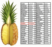 "Irish, Memes, and Norwegian: Arabic  LIUİ ||  Indonesian nanas  Irish  Italian  Latvian  Lithuanian ananasas  Macedonian ананас  Malay  Maltese  Norwegian ananas  Azerbaijani ļananas  Basque  Belarusian aHaHac  anann  ananas  ananaSS  anana  Croatian  Czech  Danish  ananaS  ananaS  ananaS  nanas  ananaS  Dutch ananas Polishananas  English  Esperanto ļananaso  Estonian ananass  Finnish  French  Georgian 5s5sbo  German  Greek  Haitian  Hungarian ananász  Icelandic ananas  pineapple Portuguese ananás  Romanian ananas  Russian  Serbian  Slovak  Slovenian ananas  Swahili  Swedish  Turkish  Ukrainian ананас  Yiddish  aHaHa  aHaHac  ananás  ananasS  ananaS  Ananas  avaváç  anana  mananasi  ananas  ananas Cause it's ""MERICA"" memesapp @memes"