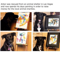 Money, Las Vegas, and Animal: Arbor was rescued from an animal shelter in Las Vegas  and now spends his days painting in order to raise  money for the local animal charities. <p>Good Boy.</p>