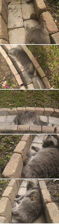 archiemcphee: The Department of Unexpected Interspecies Friendship is celebrating Caturday by enjoying these photos of a floofy grey cat and a teeny-tiny chipmunk hanging out together on a lovely day. Redditor _GoldGuy_ watched and took photos as his impressively laid-back cat befriended a chipmunk. The two were tentative at first, but eventually the tiny, stripy rodent was lounging on the cat's fluffy back and later nestling under his even floofier belly. [via Bored Panda] : archiemcphee: The Department of Unexpected Interspecies Friendship is celebrating Caturday by enjoying these photos of a floofy grey cat and a teeny-tiny chipmunk hanging out together on a lovely day. Redditor _GoldGuy_ watched and took photos as his impressively laid-back cat befriended a chipmunk. The two were tentative at first, but eventually the tiny, stripy rodent was lounging on the cat's fluffy back and later nestling under his even floofier belly. [via Bored Panda]