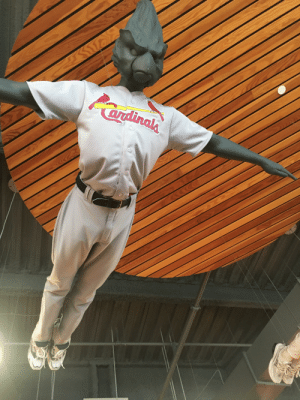 Saw, Cardinals, and Game: ardinglh Went to my first Cardinals game today and saw the ultimate bird with arms