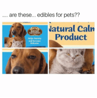 @memezar is a goldmine for dank memes!: are these... edibles for pets??  atural Caln  Product  BITE SIZE  SOFT CHEWS  Helps Anxiety  and Nervous  Behavior @memezar is a goldmine for dank memes!