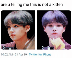 #SUGA 🐾: are u telling me this is not a kitten  10:02 AM 21 Apr 19 Twitter for iPhone #SUGA 🐾