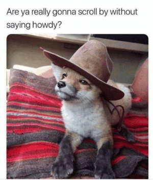 Memes, 🤖, and Really: Are ya really gonna scroll by without  saying howdy?