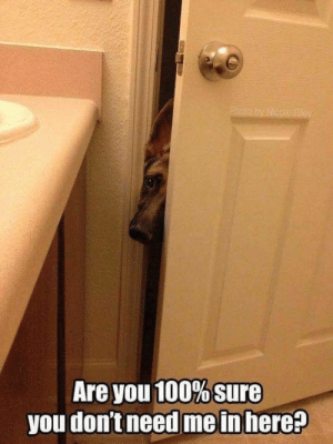 So it's decided: pets are the best kind of children! #Pets #Animals #Memes #Dogs: Are you 100% sure  you don't need me in here? So it's decided: pets are the best kind of children! #Pets #Animals #Memes #Dogs