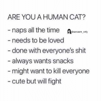 Cute, Funny, and Memes: ARE YOU A HUMAN CAT?  naps all the timercy  needs to be loved  @sarcasm_ only  - done with everyone's shit  - always wants snacks  might want to kill everyone  - cute but will fight (Via twitter-suchnerve)
