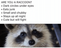 Cute, Funny, and Tumblr: ARE YOU A RACCOON?  . Dark circles under eyes  Eats junlk  Small and chubby  .Stays up all night  Cute but will fight