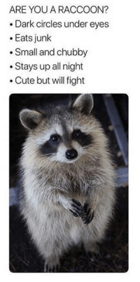 Cute, Raccoon, and Circles: ARE YOU A RACCOON?  .Dark circles under eyes  .Eats junk  .Small and chubby  .Stays up all night  .Cute but will fight
