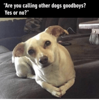 "9gag, Dogs, and Memes: ""Are you calling other dogs goodboys?  Yes or no?'"" I'd like a word with you, Brian.⠀ By whatclout 