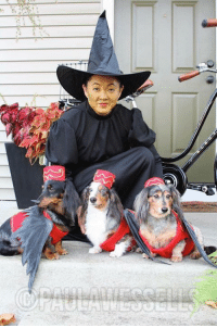 Are you celebrating Halloween with your pet? Share your photos in the comments below! My friend Paula Loves her dogs & this was too cute a photo not to share💕 I am super busy today with the dogs & new arrivals this week, but will try to get some posts up today!  #happyhowloween: Are you celebrating Halloween with your pet? Share your photos in the comments below! My friend Paula Loves her dogs & this was too cute a photo not to share💕 I am super busy today with the dogs & new arrivals this week, but will try to get some posts up today!  #happyhowloween