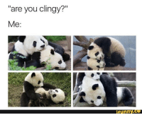 "Funny Co: ""are you clingy?""  Me:  funny.CO"