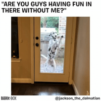 """WELL?? ARE YOU?? . @jackson_the_dalmatian: """"ARE YOU GUYS HAVING FUN IN  THERE WITHOUT ME?""""  BARK BOX  @jackson_the_dalmatian WELL?? ARE YOU?? . @jackson_the_dalmatian"""