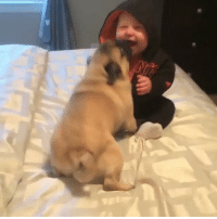 9gag, Memes, and Happy: Are you happy to see me? Follow @9gag - - 📹@circus_pugs - 9gag instapug meetcute instababy pugsofinstagram