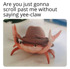 thickness-protection-program:  everythingfox: Yee-claw!   : Are you just gonna  scroll past me without  saying yee-claw thickness-protection-program:  everythingfox: Yee-claw!