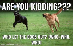 WHOOO???: ARE YOU KIDDING???  WHO LET THE DOGS OUT? (WHO, WHO  WHO)  made with mematic WHOOO???