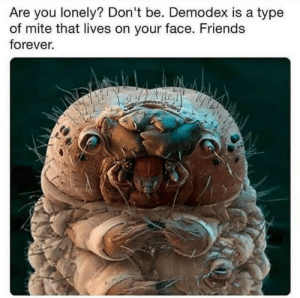 friends forever: Are you lonely? Don't be. Demodex is a type  of mite that lives on your face. Friends  forever.