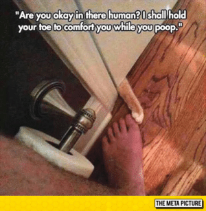 """Tumblr, Blog, and Http: """"Are you okay in there human? I shall hold  your toe to comfortyou while youpoop.  THE META PICTURE srsfunny:  Human? Are You There?"""