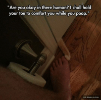 """Let Me Hold It http://www.damnlol.com/let-me-hold-it-81459.html: Are you okay in there human? I shall hold  your toe to comfort you while you poop.""""  VIA DAMNLOL.COM Let Me Hold It http://www.damnlol.com/let-me-hold-it-81459.html"""