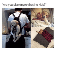 """No, no I'm not. Not because I don't want them. But because nobody wants to have them with me. (Via @dogsbeingbasic ): """"Are you planning on having kids?"""" No, no I'm not. Not because I don't want them. But because nobody wants to have them with me. (Via @dogsbeingbasic )"""