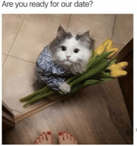 Memes, Date, and 🤖: Are you ready for our date? https://t.co/vLBfU5h0pn